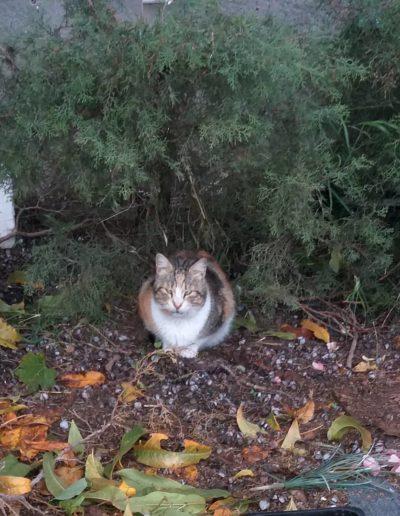 Youre Purrfect Cat Sanctuary Limassol - Image 21