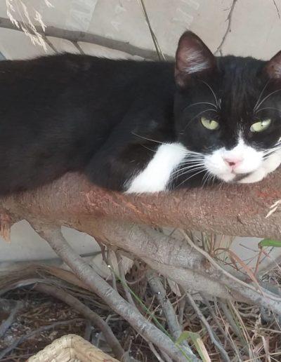 Youre Purrfect Cat Sanctuary Limassol - Image 11