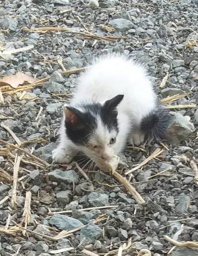 Youre Purrfect Cat Sanctuary Limassol - Image 12