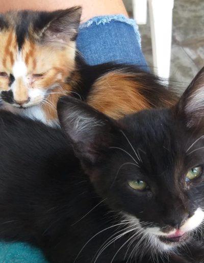 Youre Purrfect Cat Sanctuary Limassol - Image 13