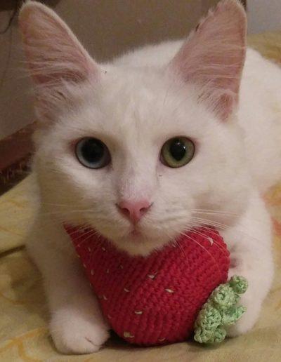 Youre Purrfect Cat Sanctuary Limassol - Image 14
