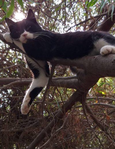 Youre Purrfect Cat Sanctuary Limassol - Image 16