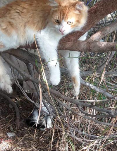 Youre Purrfect Cat Sanctuary Limassol - Image 17
