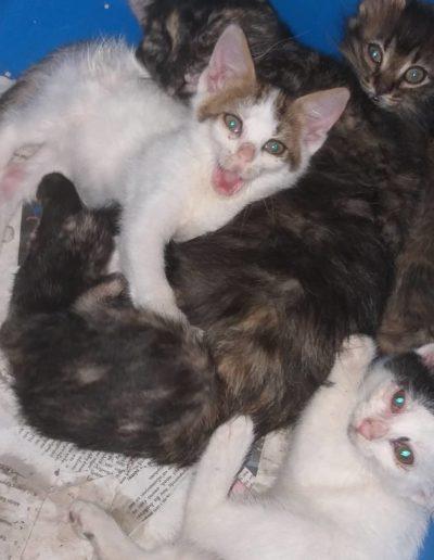 Youre Purrfect Cat Sanctuary Limassol - Image 19