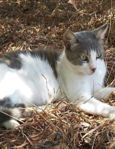 Youre Purrfect Cat Sanctuary Limassol - Image 20