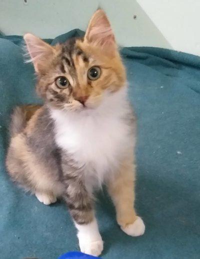 Youre Purrfect Cat Sanctuary Limassol - Image 4