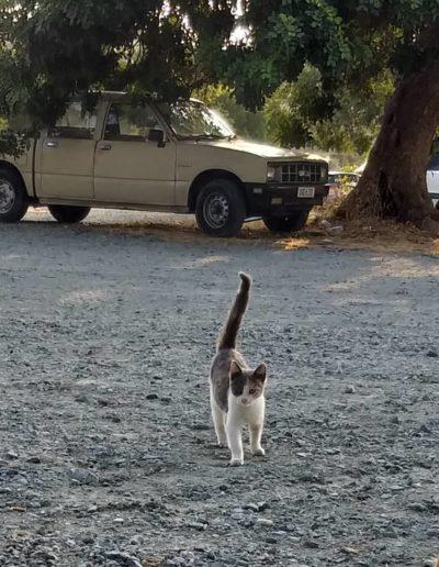 Youre Purrfect Cat Sanctuary Limassol - Image 7