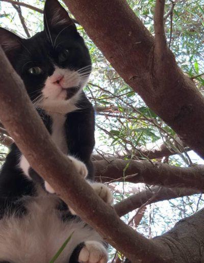 Youre Purrfect Cat Sanctuary Limassol - Image 9
